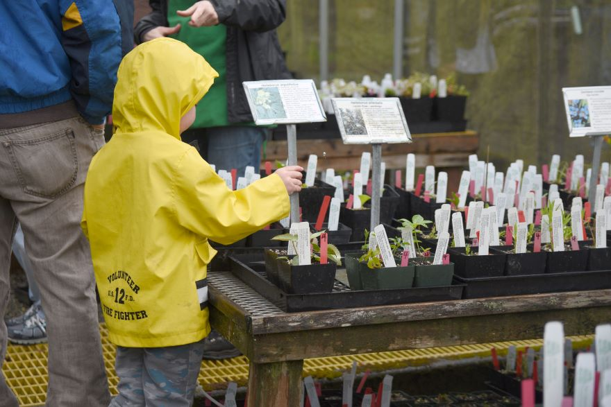 Young shopper in yellow raincoat explores the plant cuttings collection at the Pat Calvert Greenhouse