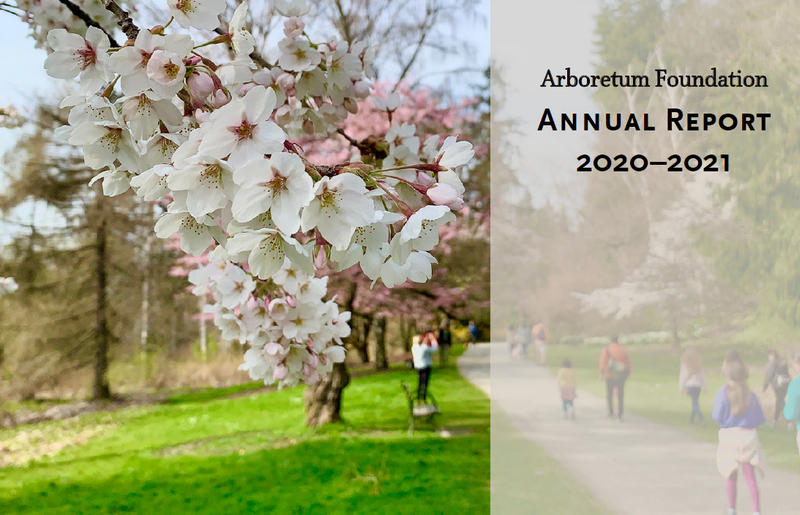 cover of annual report showing cherry tree blooming