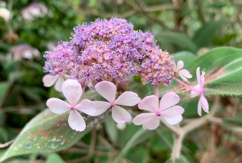15 Pacific Connections Plants for Your Garden!