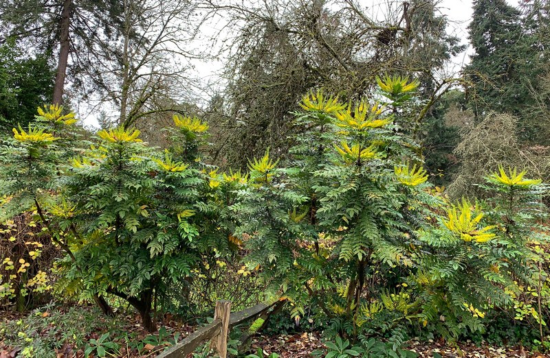 Tried and True Shrubs for the Northwest Garden