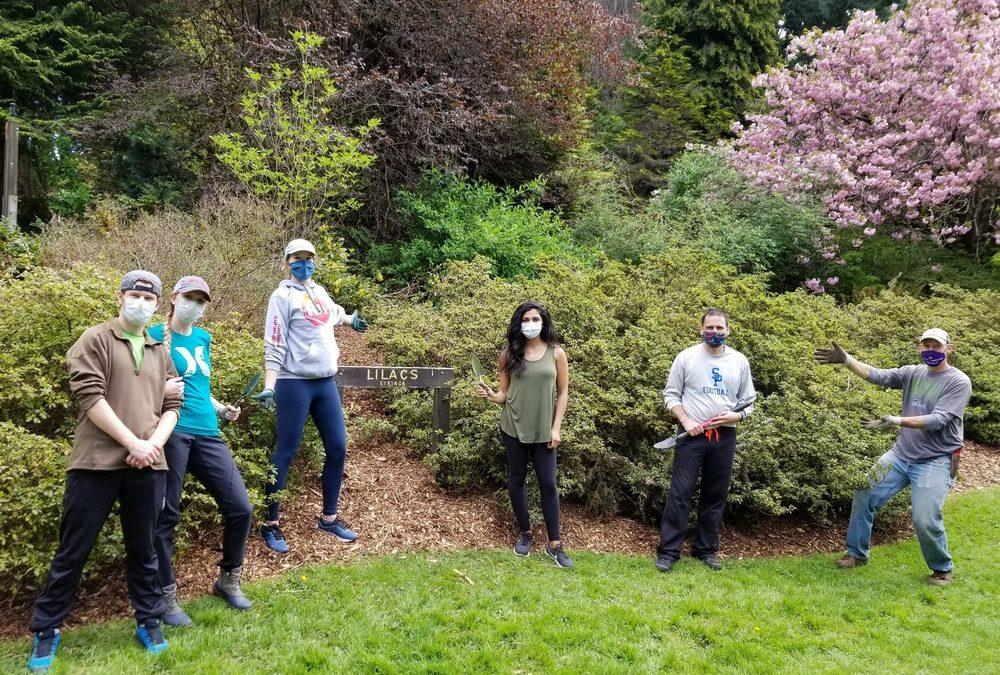 Corporate Volunteers Return in Force to Help Restore the Arboretum